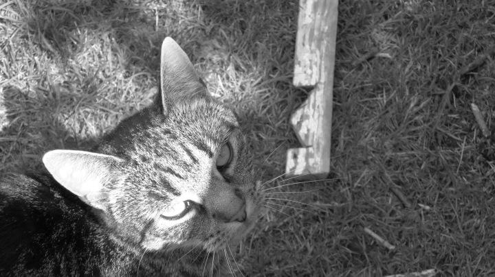 My Cat Gwynnie