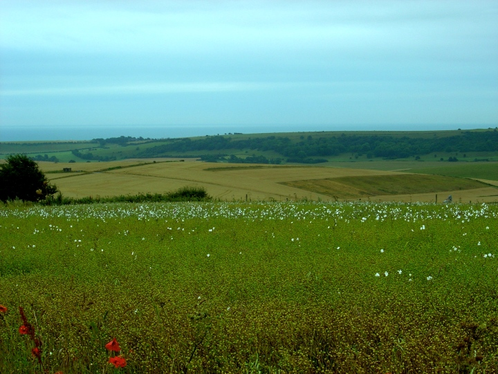 Field South Downs Way