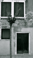 Pomegranate tree in front of house, Santa Lucia, Venice