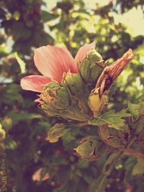 Burano flower art VIntage_MPHIX