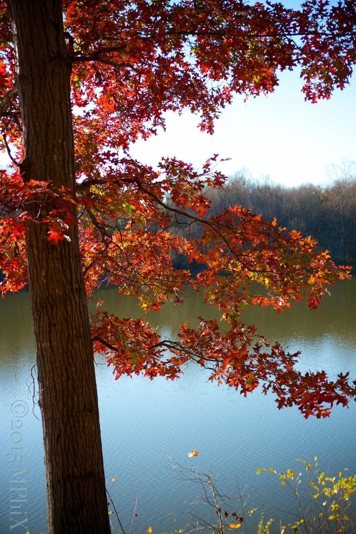 Red Fall Tree_MPHIX