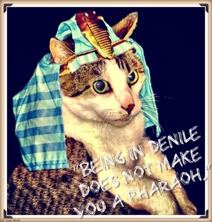 pharaoh-cat-2-hdr-2_mphix